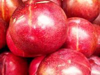 Śliwkomorela owoc – właściwości, witaminy i wartości odżywcze śliwkomoreli