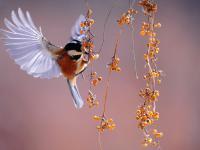 To co jemy, może przyczynić się do zagłady ptaków