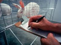 Chiny nie będą testowały kosmetyków na zwierzętach?