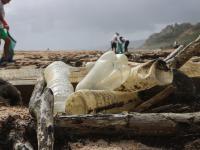 Rośnie zanieczyszczenie plastikiem mórz i oceanów