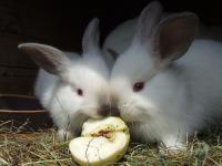 Okienko życia dla królików i gryzoni