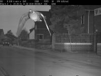 Gołąb złapał się na fotoradar