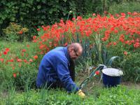 Gigantyczna kara dla Monsanto! Roundap może powodować raka