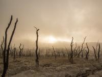 Ludzie doprowadzili do wymarcia prawie 600 gatunków roślin