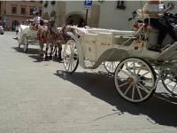 Praca koni w wysokich temperaturach może prowadzić do śmierci