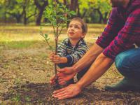 Sadzenie drzew może być najlepszym sposobem walki ze zmianami klimatu