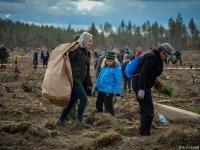 Rusza akcja nasadzania drzew w Nadleśnictwie Lipusz