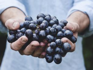 FoodCleaner - sposób na mycie i dezynfekcję żywności