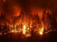 """""""Bezprecedensowe"""" pożary pustoszą Arktykę"""