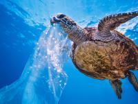 Te zwierzęta umierają przez plastik
