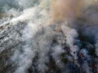 Pożary w Amazonii – co się dzieje i czy możemy coś zrobić?