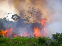 Pożary w Amazonii ‒ najgorsze jeszcze przed nami