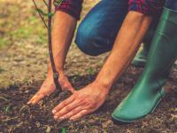Przeglądarka internetowa, która sadzi drzewa