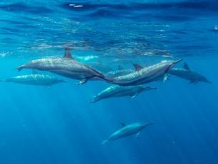 Oporność na antybiotyki dotyka również delfiny