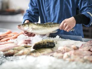 Ryby – zdrowie z morza