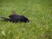 W ciągu 50 lat Ameryka Północna straciła 3 miliardy ptaków