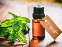 Olejek miętowy – jedna substancja na wiele dolegliwości