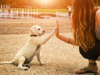 Chcesz żyć dłużej? Zaopiekuj się psem!