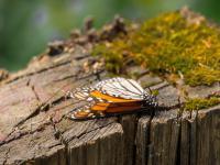Spadek owadów bardziej drastyczny niż sądzono