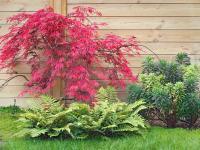 Drzewa liściaste — sprawdź, które drzewa wybrać do swojego ogrodu