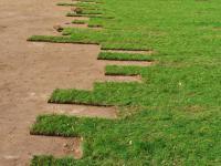 Jaka jest cena założenia trawnika przy domu? Sprawdzamy koszty różnych rozwiązań