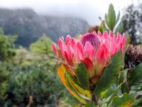 1/3 tropikalnych roślin jest zagrożona wyginięciem