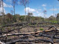 Czy COP25 sprosta globalnym wyzwaniom?
