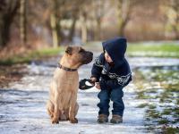 Psy zmniejszają ryzyko schizofrenii