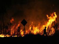 W Australii spłonęło prawie pół miliarda zwierząt