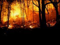 W australijskich pożarach zginęło ponad miliard zwierząt