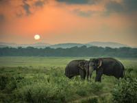 Rekordowa liczba zabitych słoni w 2019 roku