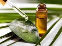Olejek eukaliptusowy – na przeziębienie, kaszel i zmęczenie umysłu
