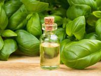 Olejek bazyliowy – leczy i odkaża