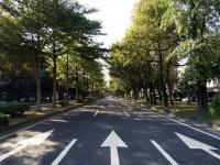 Jak miejskie drzewa i żywopłoty oczyszczają powietrze?