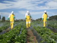 Jak firmy zarabiają na sprzedaży niebezpiecznych pestycydów