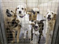 W obawie przed koronawirusem porzucają zwierzęta