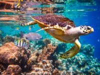 Oceany można przywrócić do dawnej świetności w ciągu 30 lat