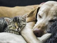 Pierwsze miasto chińskie, które zakazuje konsumpcji kotów i psów