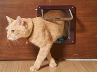 Trzymajcie swoje koty w domu ‒ zalecają weterynarze