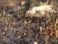 Biebrzańskie lasy i łąki przestały płonąć