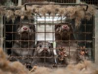 Czy będzie zakaz ratowania maltretowanych zwierząt?