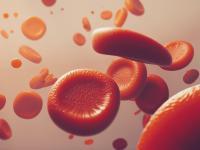 Erytrocyty (krwinki czerwone) – budowa, funkcje i norma erytrocytów