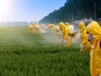 UE ograniczy stosowanie pestycydów. Wszystko, by ratować pszczoły