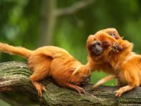 Naukowcy alarmują: szóste masowe wymieranie dzikiej przyrody przyspiesza