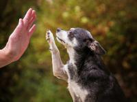 Sejm przyjął projekt Piątka Dla Zwierząt