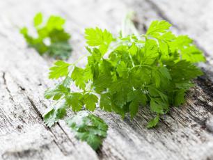 Zdrowie zaklęte w zielonych listkach. Co jeszcze wiemy o trybuli