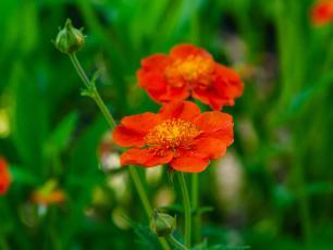 Kukliki  - kolorowy i bardzo trwały dodatek do sielskich ogrodów