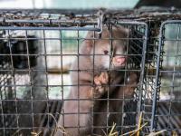 Nowelizacja ustawy o ochronie zwierząt rusza dalej!