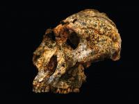 Czaszka sprzed 2 milionów lat rzuca nowe światło na ewolucję człowieka