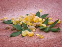 Kadzidłowiec indyjski, czyli jak Boswellia serrata pomaga zdrowiu?